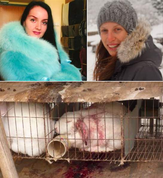Dying fur and the growing use of fur trim has led to an increase in fur sales and by extension in the number of fur farms.