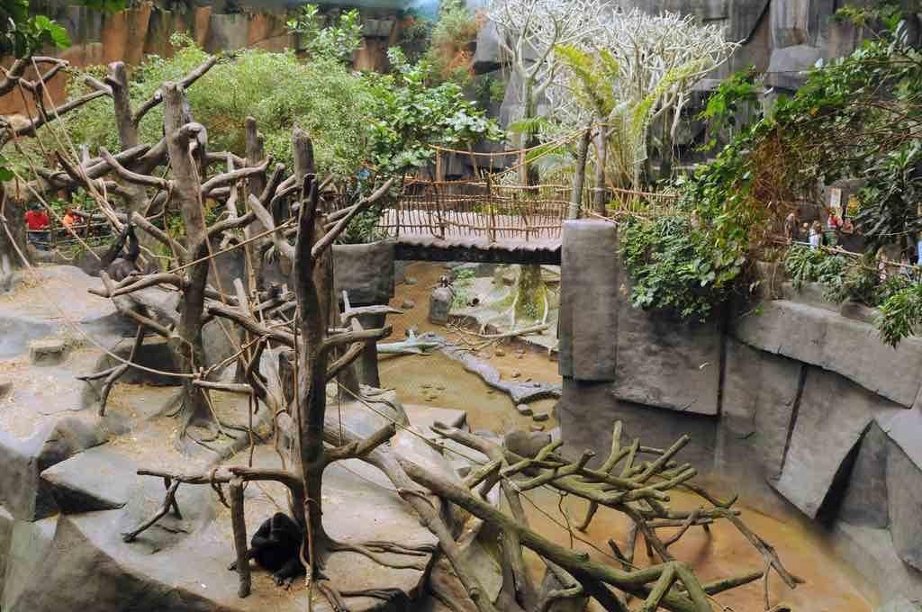 Cincinnati Zoo gorilla enclosure