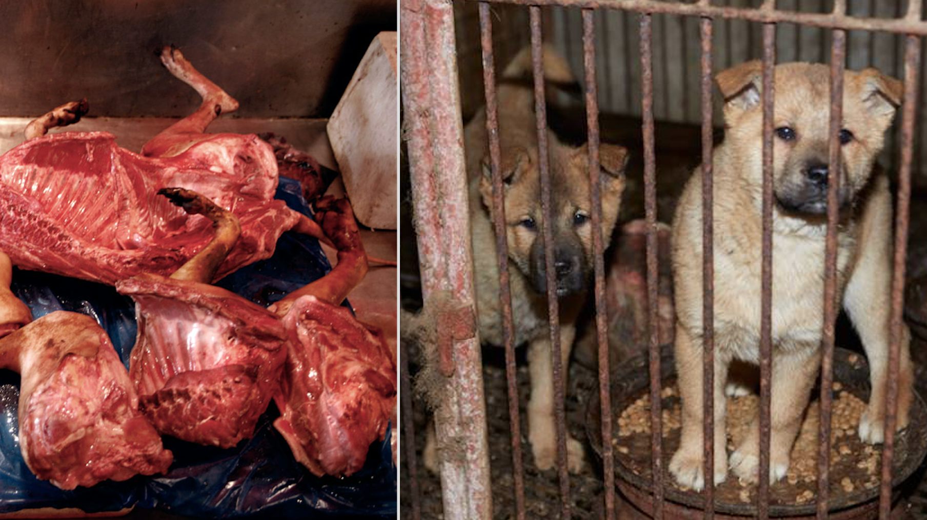 In South Korea, dogs around 2.5 million dogs are killed for their flesh every year.