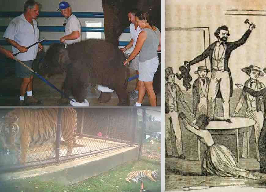 Baby animals are oftentimes taken away away from their mothers in circuses, not so differently from how families were separated at Southern slave auctions.