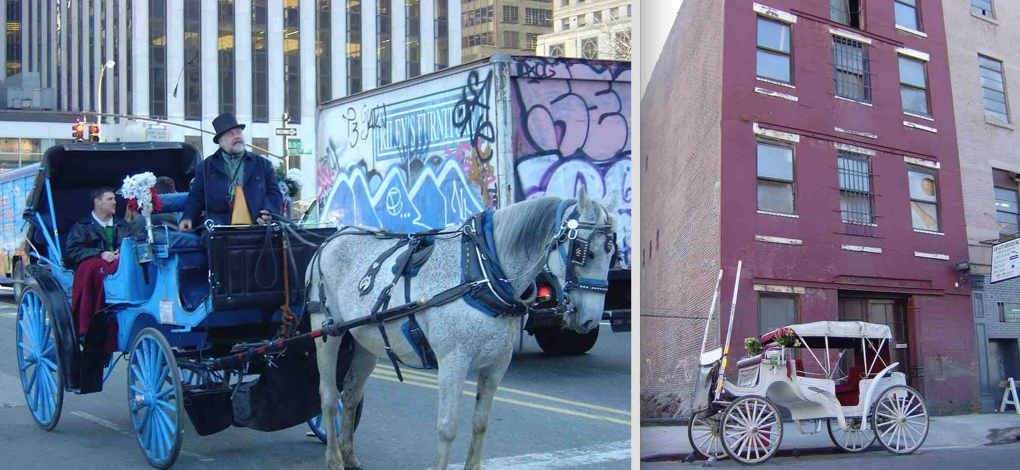 The horses who pull carriages in NYC are housed in multi-story buildings after working in midtown. NYC has no pasture where the horses can graze and interact with other horses.