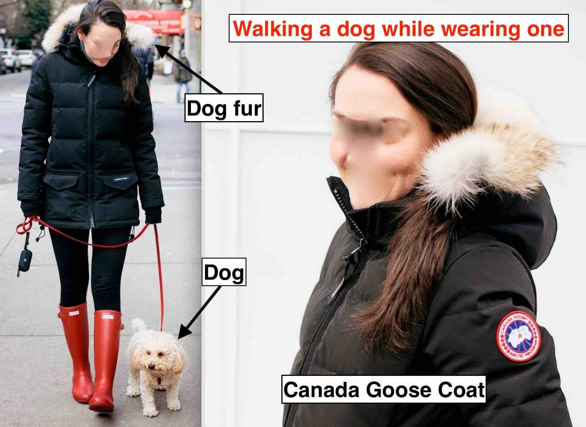 Activists help Canada Goose customers connect the dots between their dogs who they love and the dogs who they're wearing.
