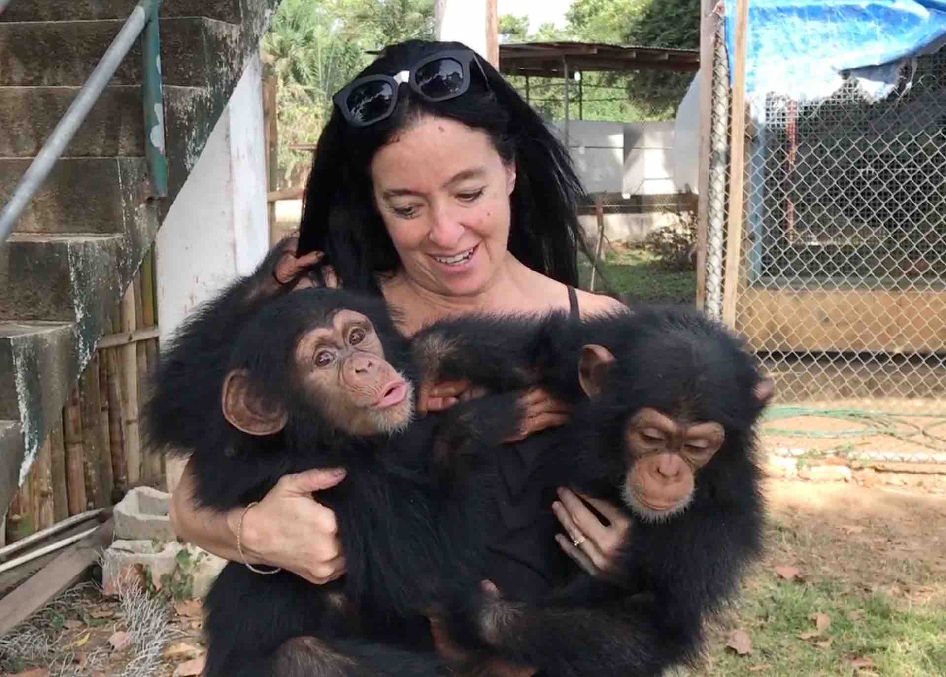 Orphaned Baby Chimps Find Refuge - Their Turn